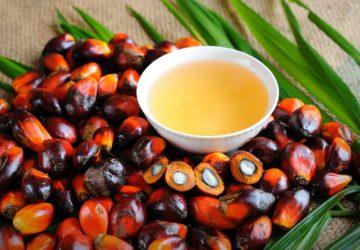 huile-palmiste-cheveux
